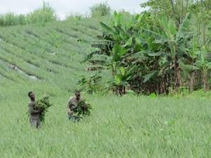 2011-Galandrin Francois-Cameroun 108-P_th_450