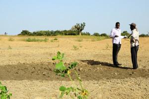 Agriculture Mali (Photo de CGIAR Climate - Flickr)