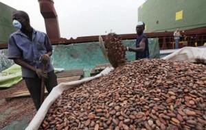 cacao-ivoirien