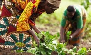 agriculture_cameroun