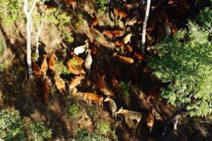 Mozambique Agriterra se porte bien