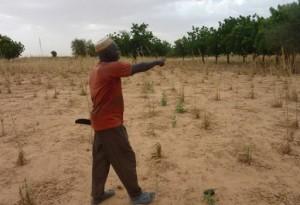 Niger difficultés alimentaires à l'horizon