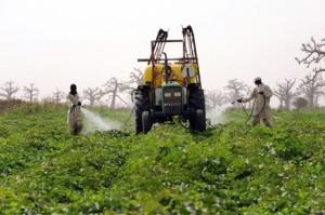 Angola Pour une relance du secteur agricole