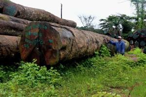 Libéria sanctions dans le secteur forestier