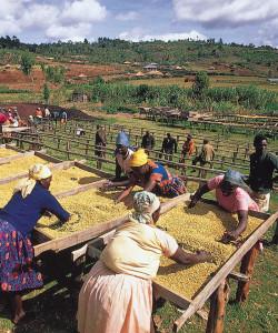 kenya-agriculture
