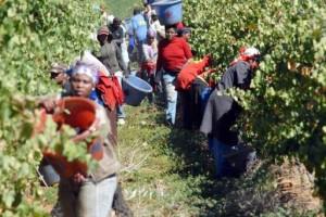 Afrique du Sud des sanctions contre les exploitants agricoles récalcitrants