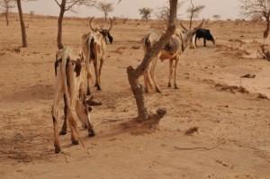 Niger_1_014_0