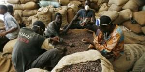 645164_cacao-gonate-cote-d-ivoire