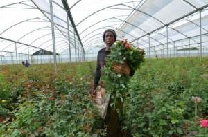zambie-agriculture-financement-BM