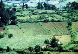 mesures-ecologiques-kenya