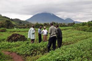 ouganda-agriculture