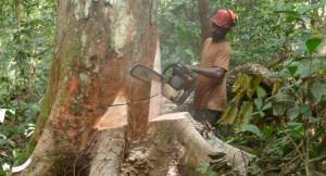gabon-chine-amenagement-forestier