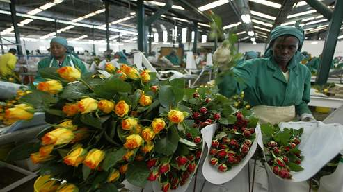 KENYA-TRADE-FLOWERS-ETHICS