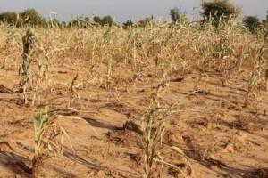 2302-26779-la-banque-mondiale-apporte-10-millions-a-la-mauritanie-pour-lutter-contre-la-secheresse_L