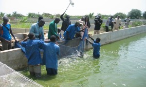 Mali-Pisciculture-Projet