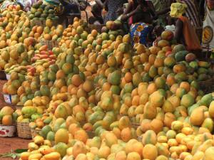 mangue-export