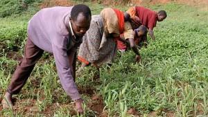 mais-rwanda