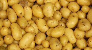 pomme-terre-algerie