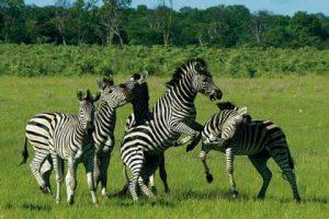 zimbabwe-parc-animaux