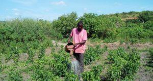 congo-appui-agriculture
