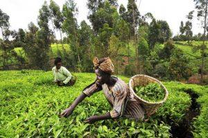 agriculture_afrique_-bad
